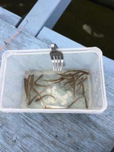 訪湖でドーム船ワカサギ釣り