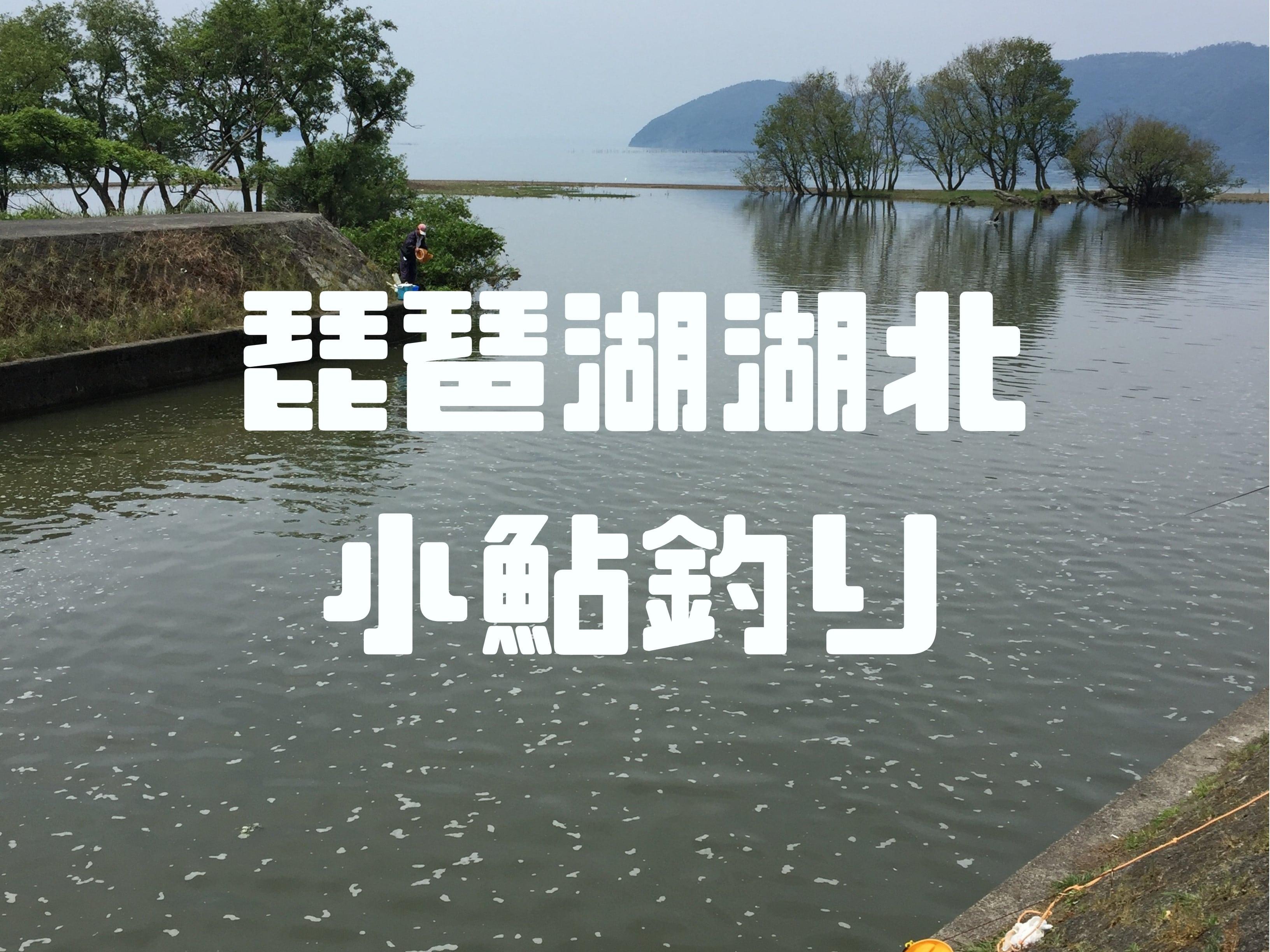 琵琶湖湖北小鮎釣り
