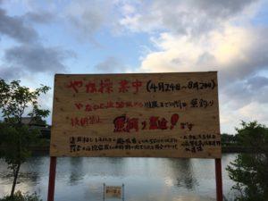 天野川小鮎釣り
