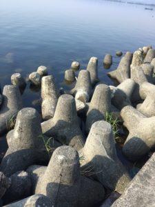 「生来川」と「知内川」の間の漁港のテトラ