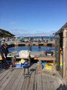 海上釣り掘り海恵