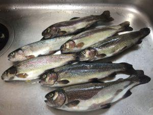 【2020年3月】愛知県の管理釣り場、北方マス釣り場にニジマス釣りに行ってきました
