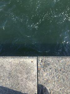 堤防からマダコをルアー(タコエギ)で釣る方法!おすすめルアーやカラーなどについてもご紹介します