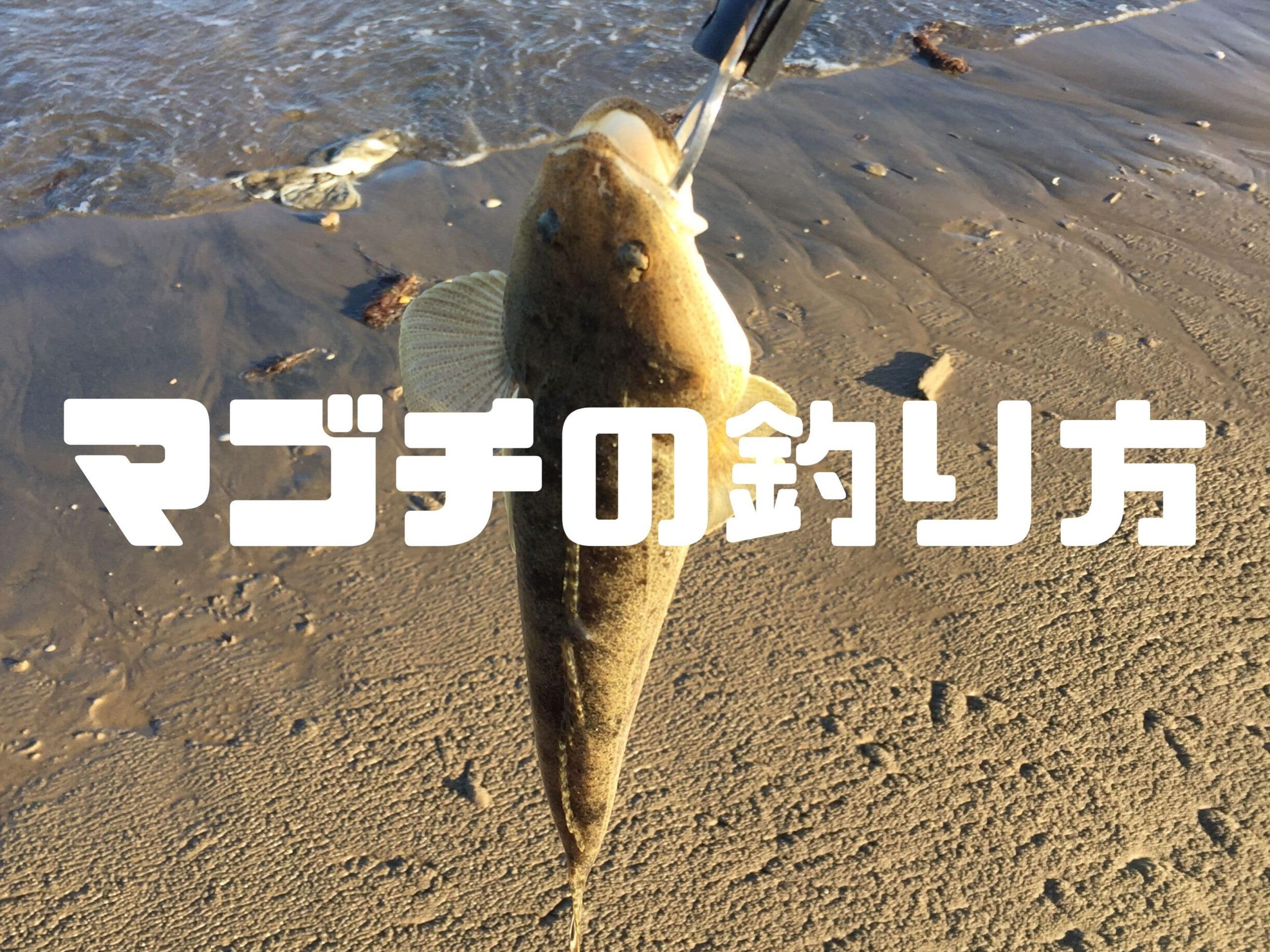 フラットフィッシュのマゴチを砂浜や堤防からルアーで釣る方法