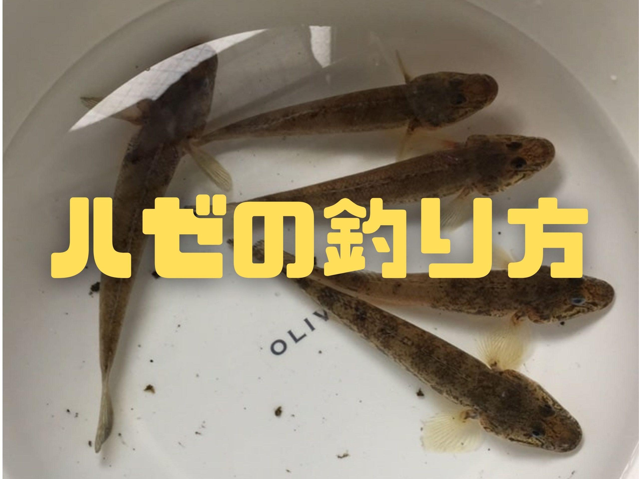 ハゼの釣り方(ウキ釣り・チョイ投げ・ルアー釣り)