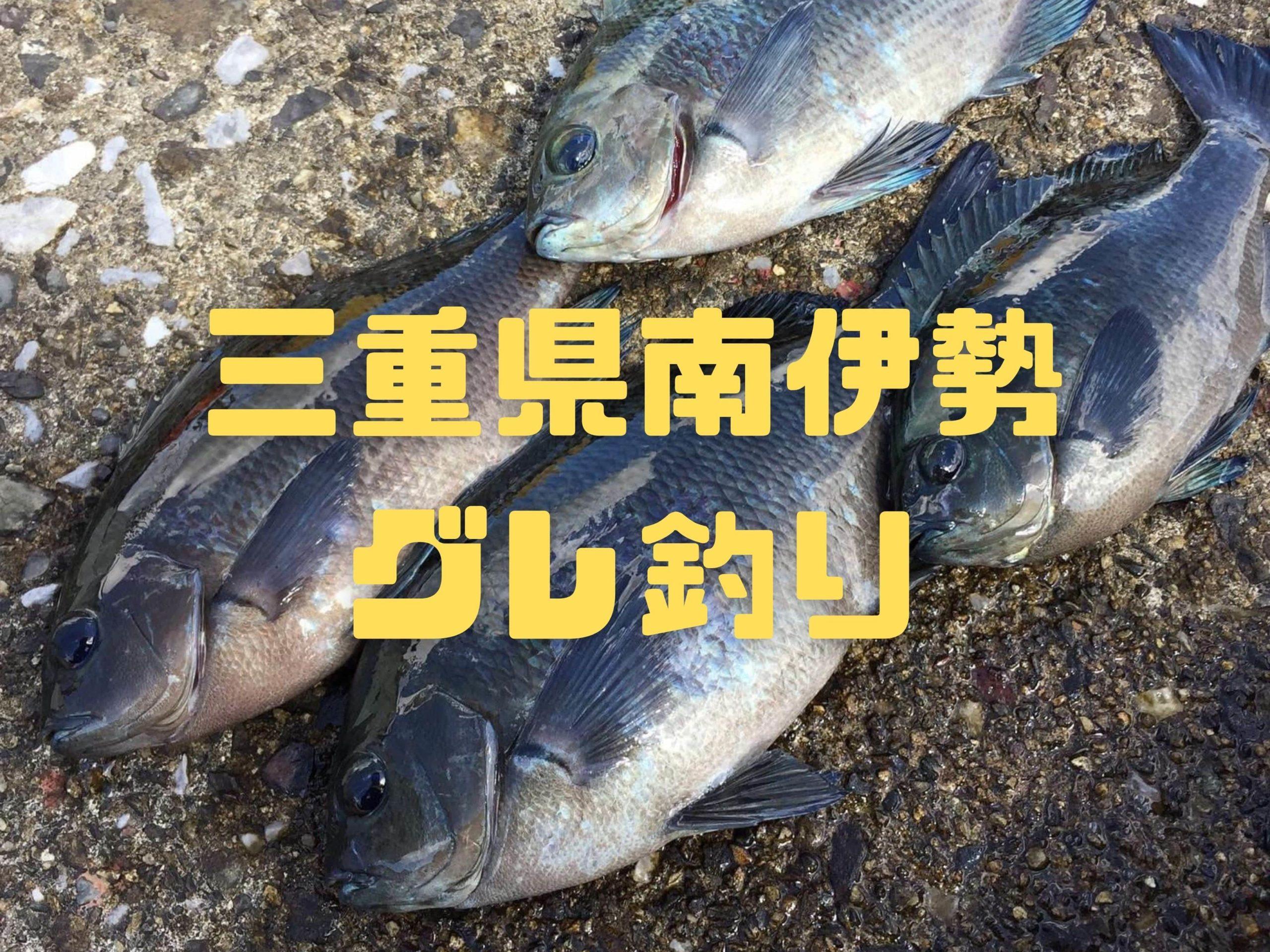 【2020年10月】三重県南伊勢にフカセ釣りでグレを釣りにいってきました