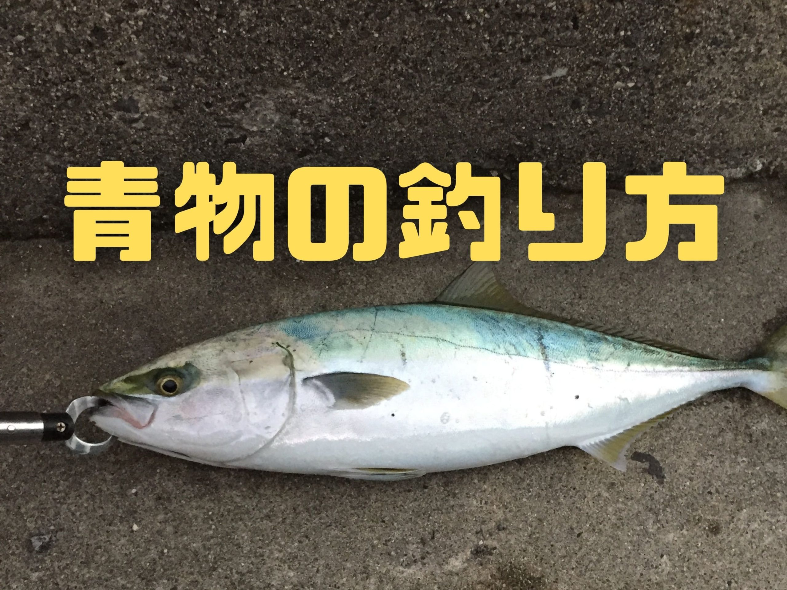 三重県・愛知県でショアジギングで青物を釣る方法