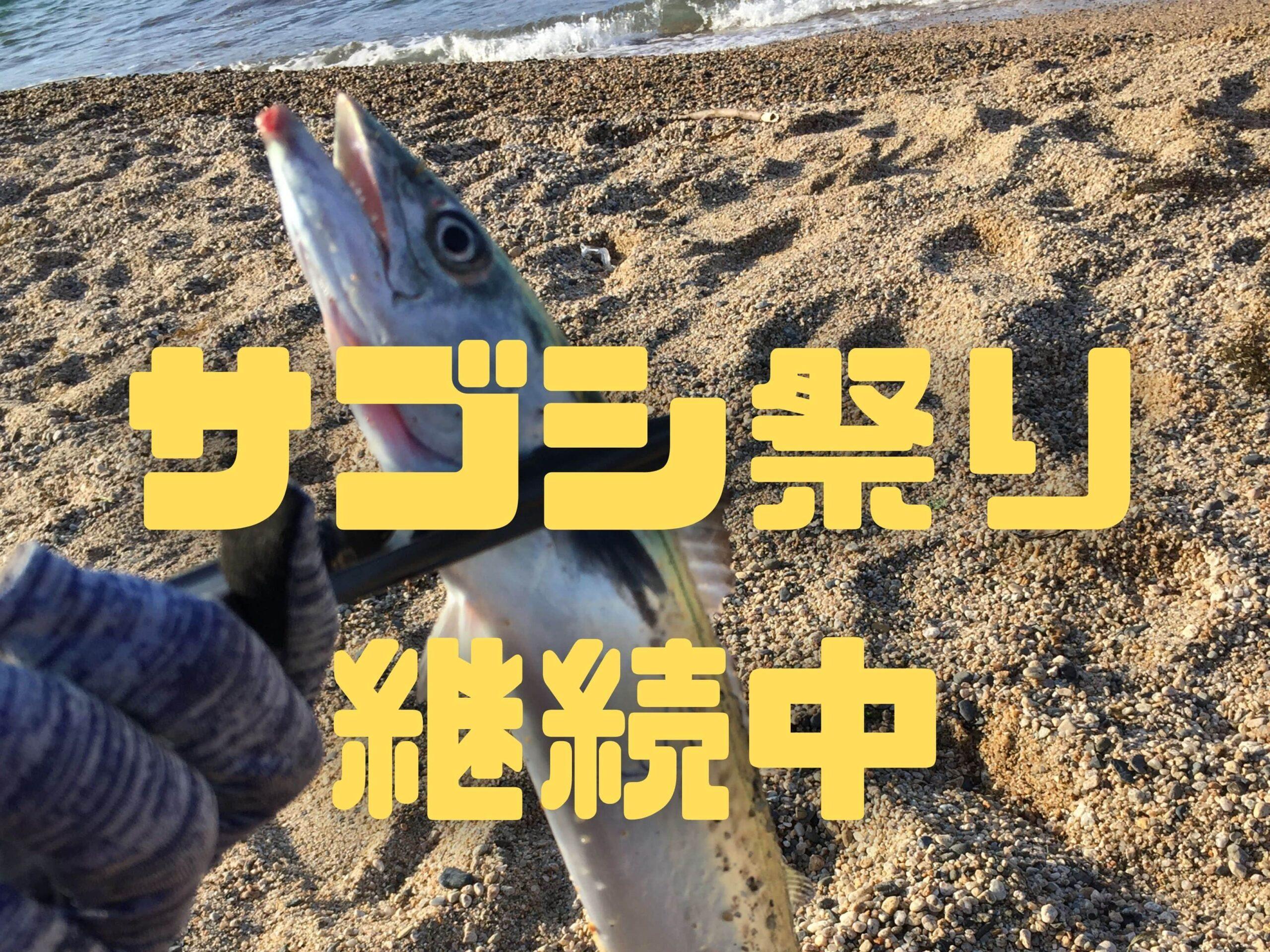 【2020年3月】福井県敦賀にサゴシ釣りに行ってきました