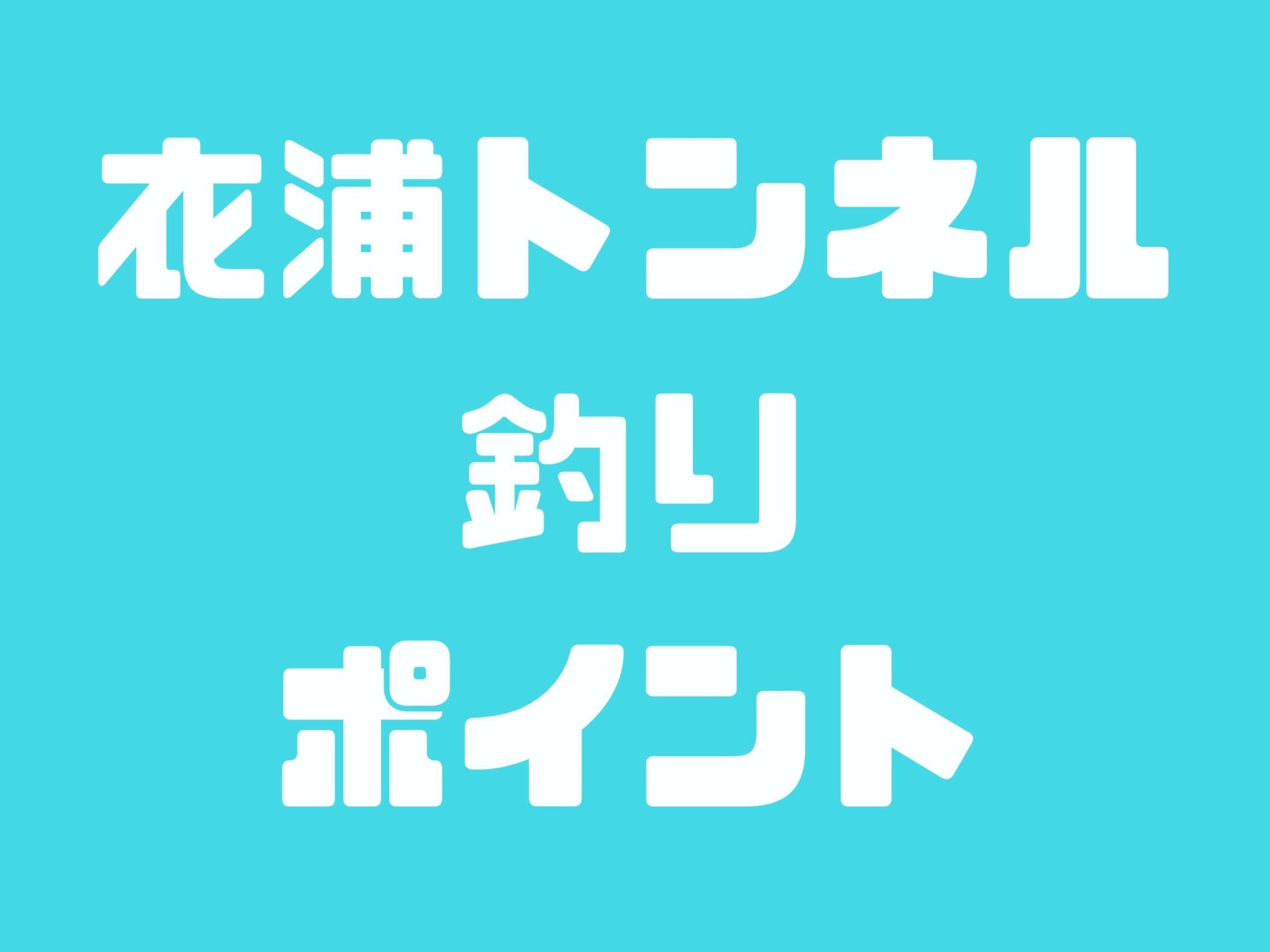 【衣浦トンネル】カサゴ・シーバス・チヌ・ヒイカ・アナゴが釣れる