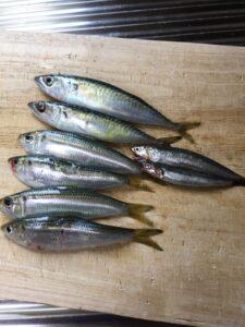 【2021年6月3日】武豊緑地に小サバを釣りに行ってきました